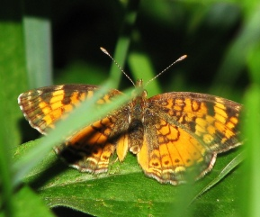 Butterfly- Clubbed antennae Photo credit: Flickr user, mdprovost ~ Prosper in 2011 https://www.flickr.com/photos/anderani/2561994401/in/photolist-4UoTFg-4Ut8cj-78JXfz-8BQcEj-6XEJgT-6VsTTt-8Di5hR-8DgWXy-81cZTB-8CdTf7-8DdQmz-6XJKko-6Vx83w-6VwPyS-6FHPoJ-8BLF1H-7mMFov-6XEHC6-6Gznm2-7mkp2n-6Aiuu6-6PcZDk-8Dm7JU-78NNWJ-78JWMR-78JWwv-78JWaZ-78NMA3-78NMno-78JVp8-78NLT9-82Pr7r