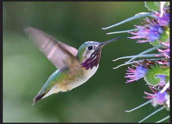Photo credit Flickr user: Tom Benson