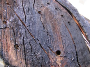 drilled out old tree stump/log