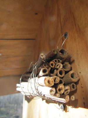 http://www.waldeneffect.org/blog/Nesting_habitat_for_native_bees/ phot credit: Anna Hess