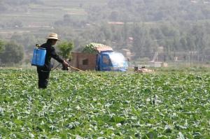 Spreading Pesticide