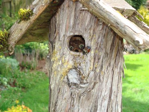 Nesting inside a bird house