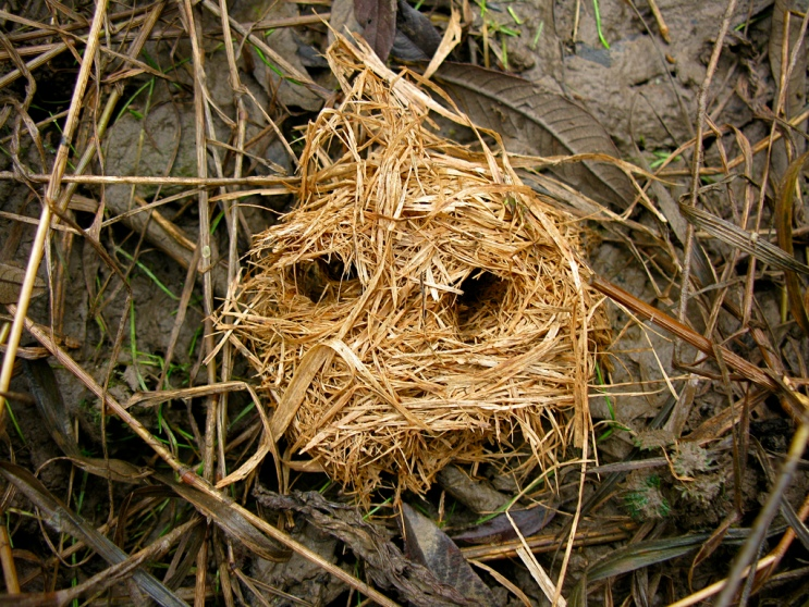 Inside abandoned rodent nests