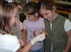 Photo credit: monarchparasites.org